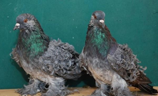 vtáky z peria datovania mieste